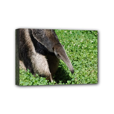 Giant Anteater Mini Canvas 6  X 4  (framed) by AnimalLover