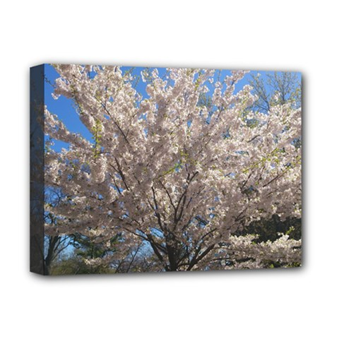 Cherry Blossoms Tree Deluxe Canvas 16  X 12  (framed)  by DmitrysTravels