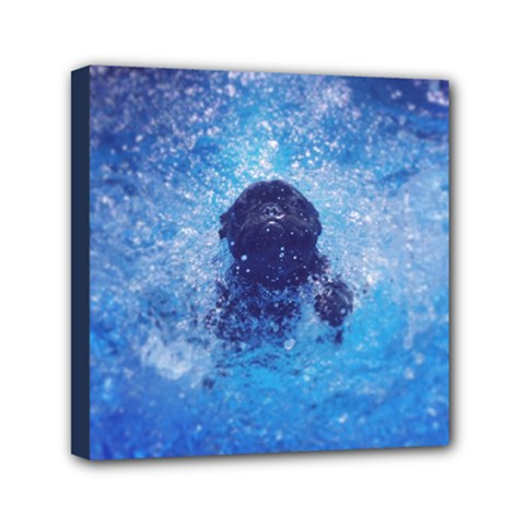French Bulldog Swimming Mini Canvas 6  X 6  (framed) by StuffOrSomething
