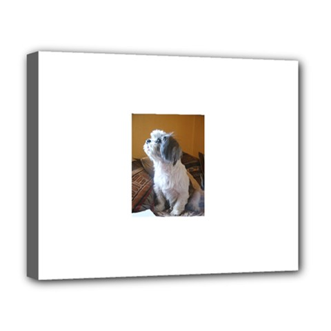 Shih Tzu Sitting Deluxe Canvas 20  X 16   by TailWags
