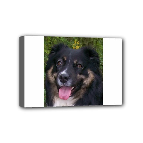 Australian Shepherd Black Tri Mini Canvas 6  X 4  by TailWags