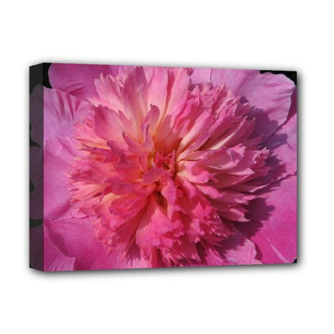 Paeonia Coral Deluxe Canvas 16  X 12   by trendistuff