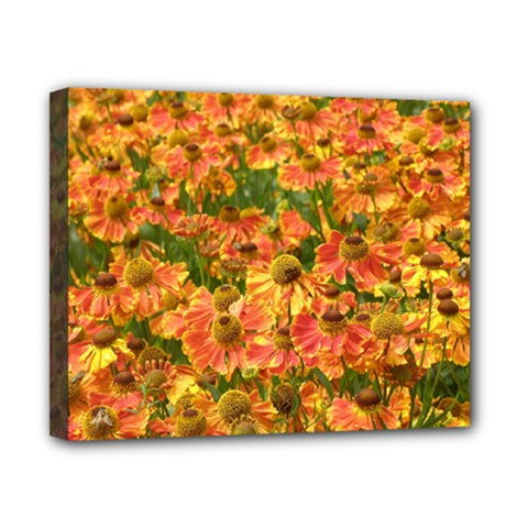 Helenium Flowers And Bees Canvas 10  X 8  by GiftsbyNature