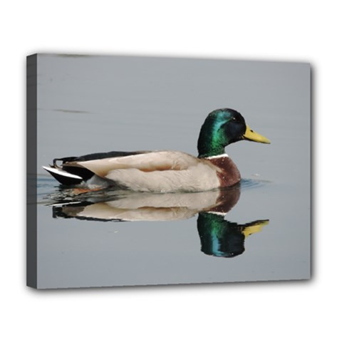 Wild Duck Swimming In Lake Canvas 14  X 11  by picsaspassion