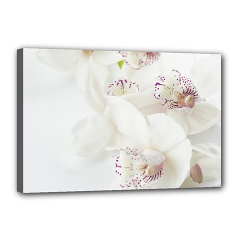 Orchids Flowers White Background Canvas 18  X 12  by Amaryn4rt