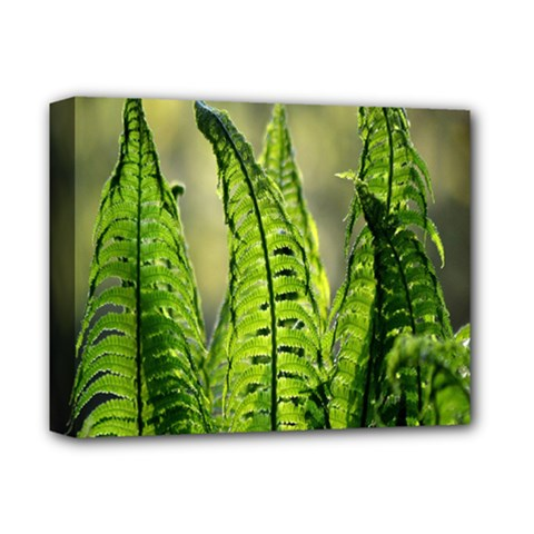 Fern Ferns Green Nature Foliage Deluxe Canvas 14  X 11  by Nexatart