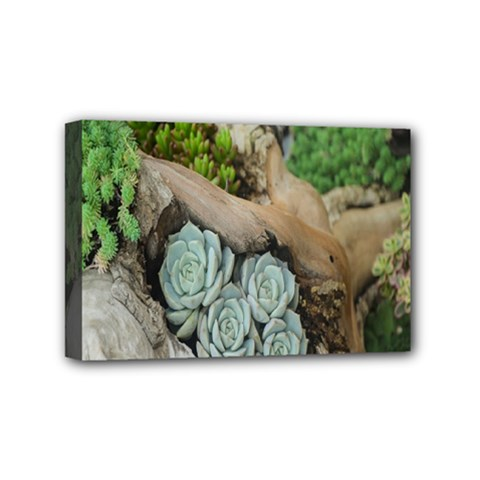 Plant Succulent Plants Flower Wood Mini Canvas 6  X 4  by Nexatart