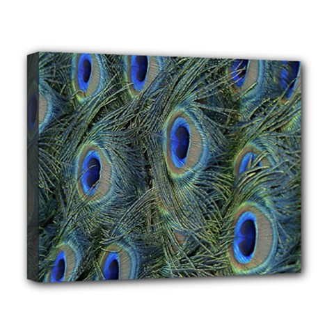 Peacock Feathers Blue Bird Nature Deluxe Canvas 20  X 16   by Amaryn4rt
