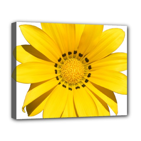 Transparent Flower Summer Yellow Deluxe Canvas 20  x 16   by Simbadda