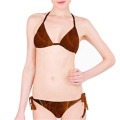 Fractal Color Lines Bikini Set