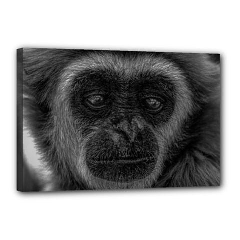 Gibbon Wildlife Indonesia Mammal Canvas 18  X 12  by Celenk