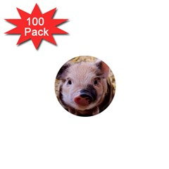 Sweet Piglet 1  Mini Magnets (100 Pack)