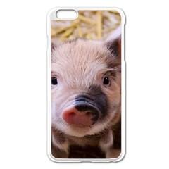 Sweet Piglet Apple Iphone 6 Plus Enamel White Case