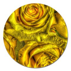 Gorgeous Roses, Yellow  Magnet 5  (round)