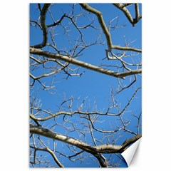 Leafless Tree Branches Against Blue Sky Canvas 12  X 18   by dflcprints