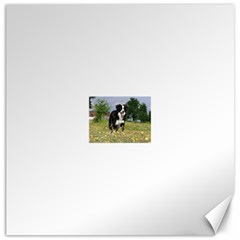 Border Collie Full 3 Canvas 20  X 20   by TailWags