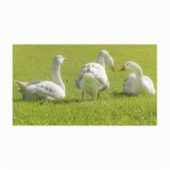 Group of White Geese Resting on the Grass Collage 12  x 18  by dflcprints