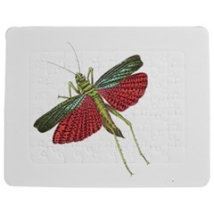 Grasshopper Insect Animal Isolated Jigsaw Puzzle Photo Stand (rectangular) by Nexatart