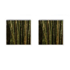 Green And Brown Bamboo Trees Cufflinks (square) by Nexatart