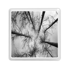 Trees Without Leaves Memory Card Reader (square)  by Nexatart