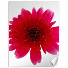 Flower Isolated Transparent Blossom Canvas 12  X 16   by Nexatart