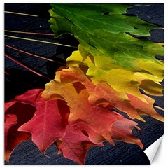 Green Yellow Red Maple Leaf Canvas 12  X 12   by BangZart
