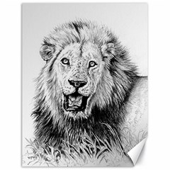 Lion Wildlife Art And Illustration Pencil Canvas 18  X 24