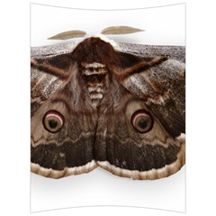 Night Butterfly Butterfly Giant Back Support Cushion by Sapixe