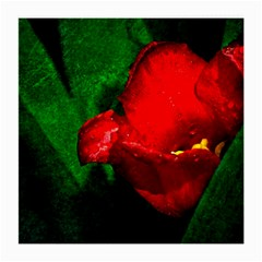 Red Tulip After The Shower Medium Glasses Cloth by FunnyCow